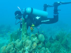 Spawning Of Brain Coral In Bayahibe - Main