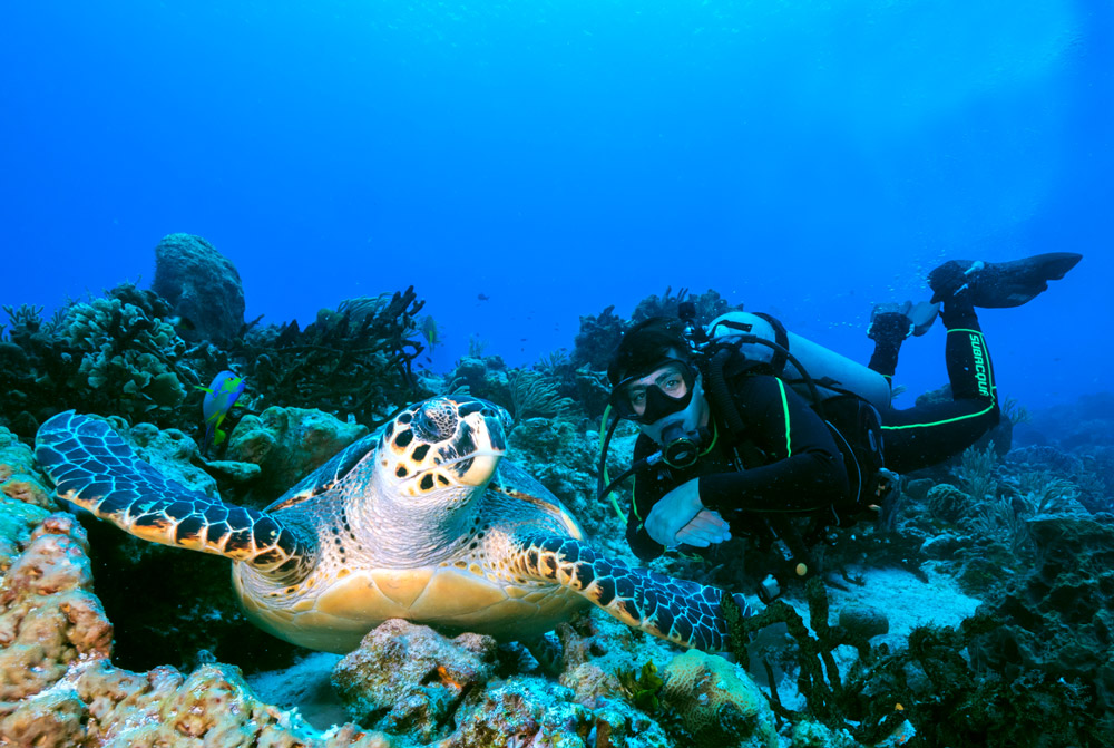 PADI open water depth - turtle