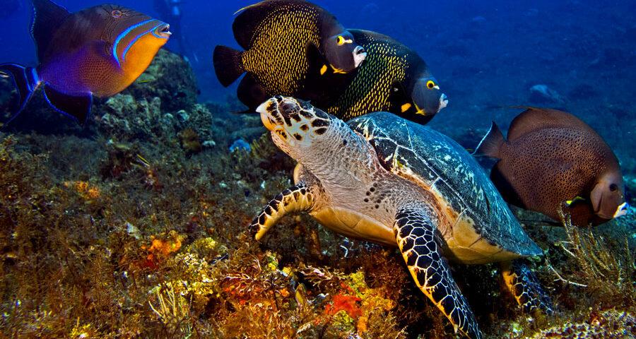 Parque Nacional Arrecifes de Cozumel - foto principal