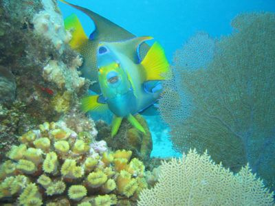 sitios de snorkel playa del carmen