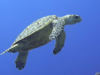 hacer snorkel playa del carmen
