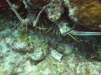 puerto aventuras diving
