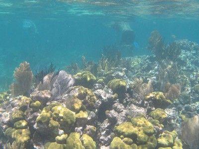 puerto aventuras snorkelcentra