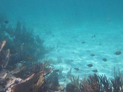 snorkeling shops puerto aventuras