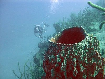 plongée sous-marine puerto plata