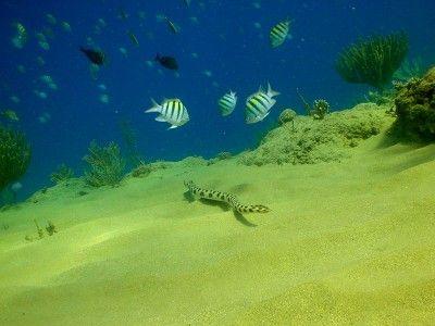snorkeling trips puerto plata