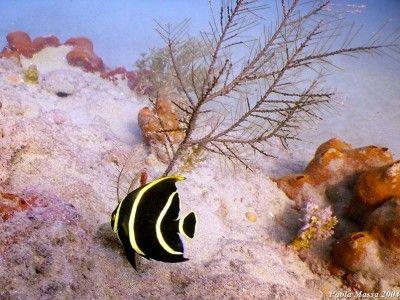 salidas de snorkel puerto plata