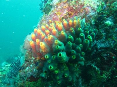 Centro Immersione Puerto vallarta