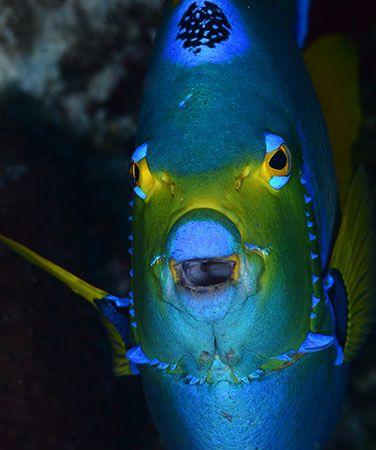 Puerto Aventuras Scuba Diving