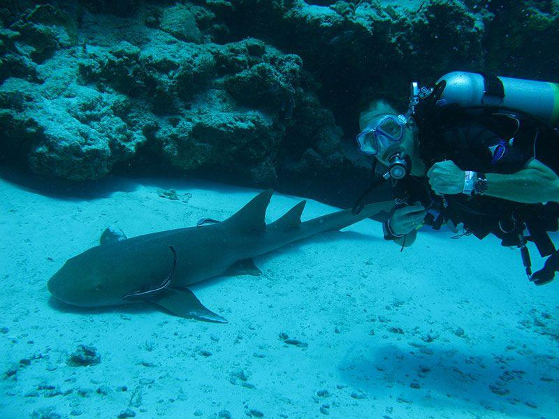 Bucear en PUNTA CANA y BÁVARO con Dressel Divers