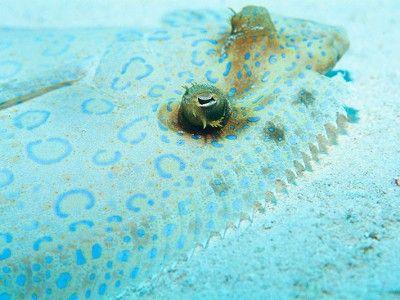 duik punta cana dressel divers
