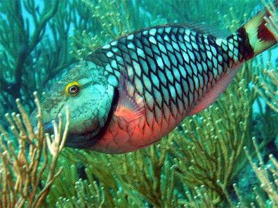punta cana duiken