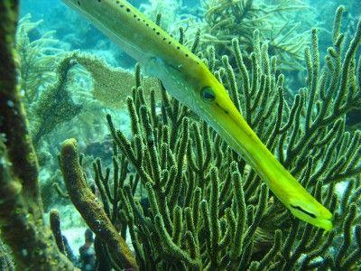sitios de snorkel punta cana