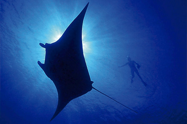 Red Sea Liveaboard Scuba Diving - Manta