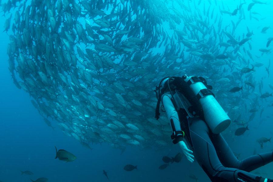 Reef hooks - ganchos de arrecife - 2