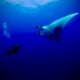 Reef hooks - ganchos de arrecife - 3