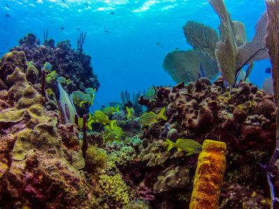 isla saona excursiones