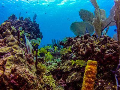 saona island excursions