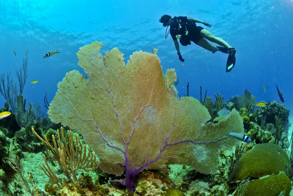 Scuba diving in MONTEGO BAY with Dressel Divers