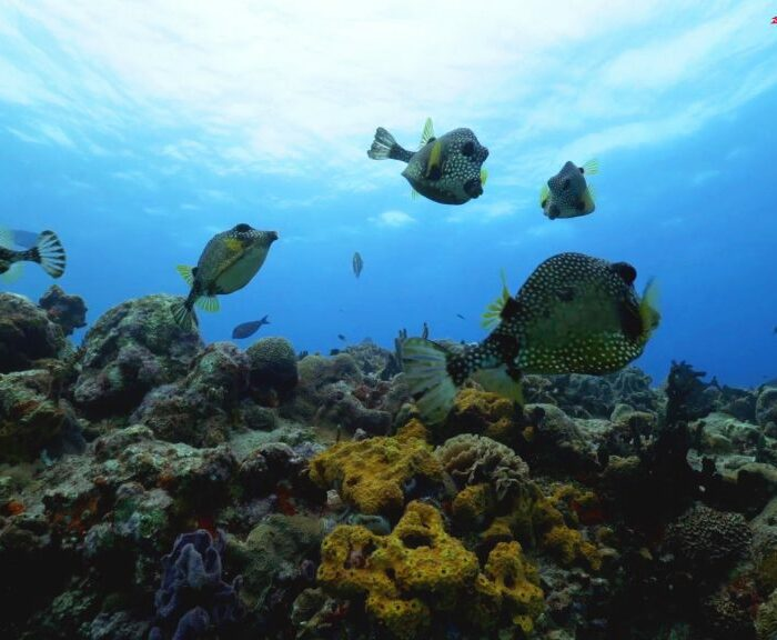 Scuba Diving Playa Del Carmen - Best-Caribbean-Coral-Reefs-Playa-Del-Carmen-1024x576