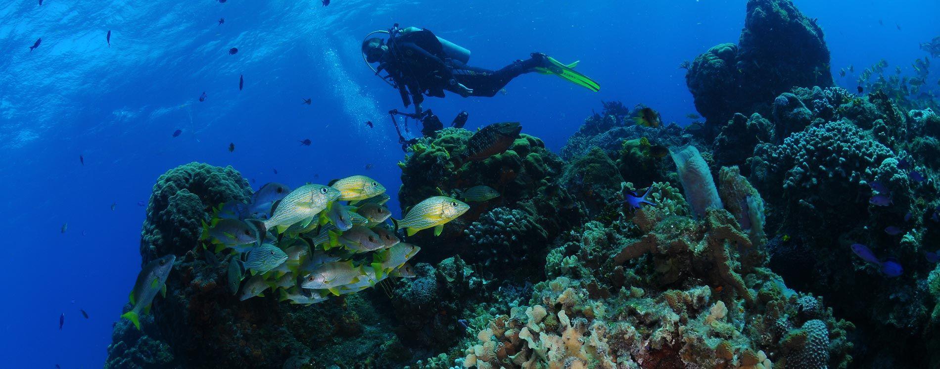 Scuba Diving Banner1