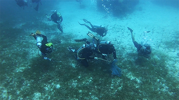 Seabed Cleaning In Riviera Maya (puerto aventuras)