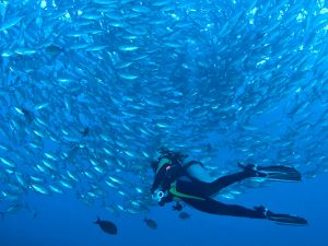 Solomon Islands Liveaboard Diving - fish
