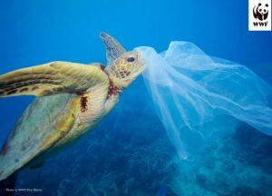 world ocean's day 2021