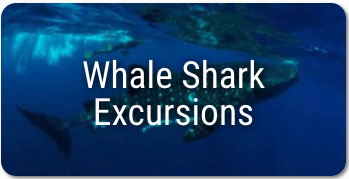 Scuba diving in Mexico - Whale Shark Excursion