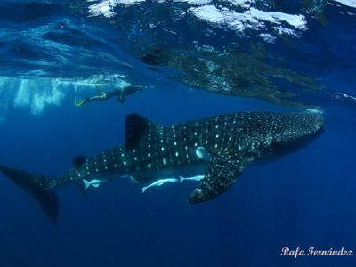 tours requins-baleines