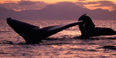 Whale_Watching_Excursion