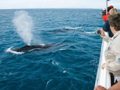 tour observation baleines