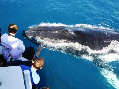 Observation baleines excursions