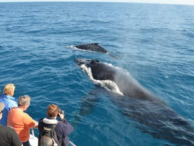 Whale Watching Excursion