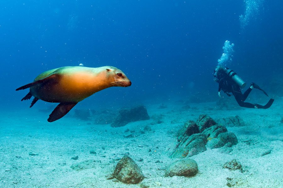 buceo en solitario - leon marino
