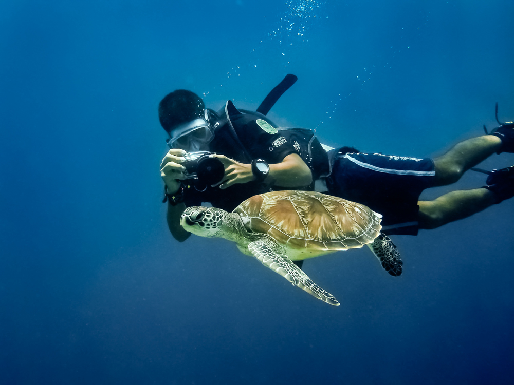 buceo recreativo - diver and turtle