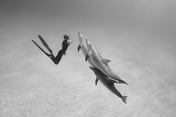 buceo-vida-a-bordo-en-el-mar-rojo-12