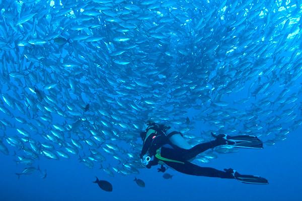 buceo-vida-a-bordo-en-las-islas-salomon-12