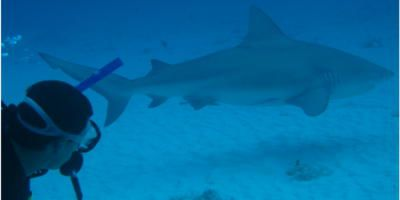 Bull shark diving trip to Cozumel