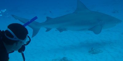 Bull Shark Diving Excursion