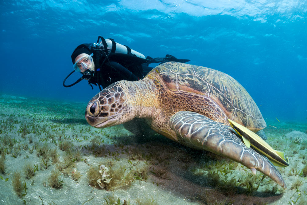 buoyancy control - turtle