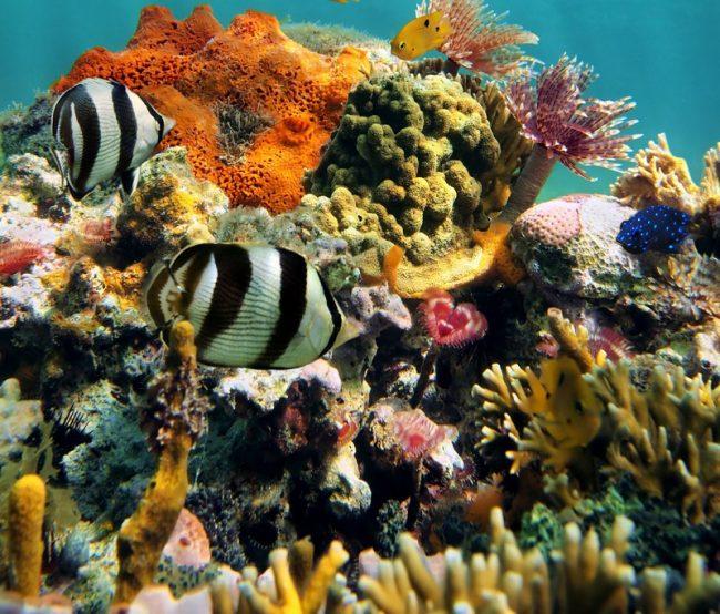 caribbean scuba diving - bucear en el caribe - 4
