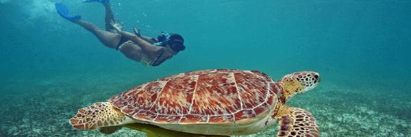 Mayan snorkel