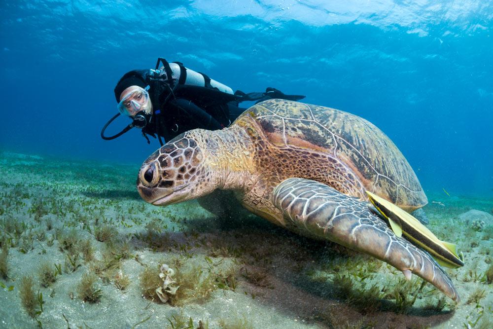 contrôle de la flottabilité des tortues
