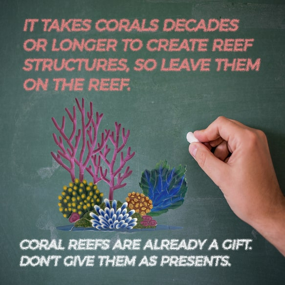 Protect Coral Reefs - Coral Reef protection - Keep your hands still, don't touch