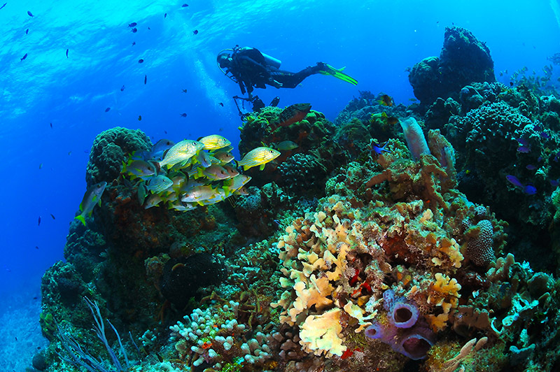dive pictures