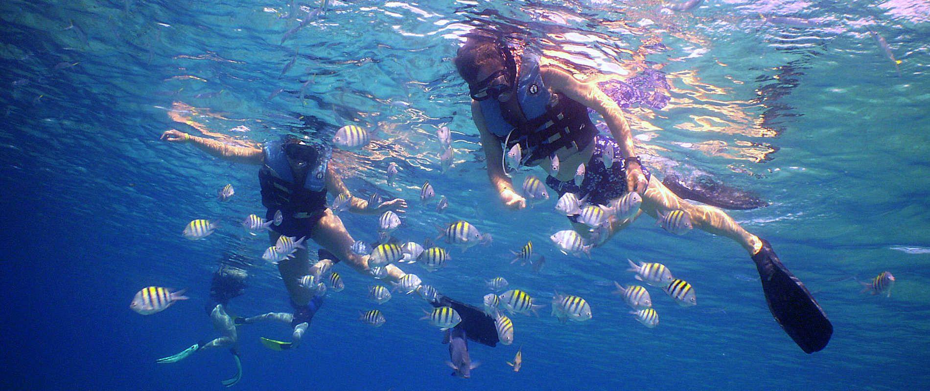 Divers Snorkeling