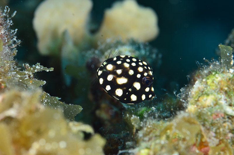 fotos de buceo - trunkfish