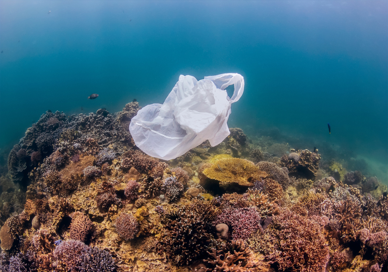 Seabed Cleaning In Jamaica - Plastic