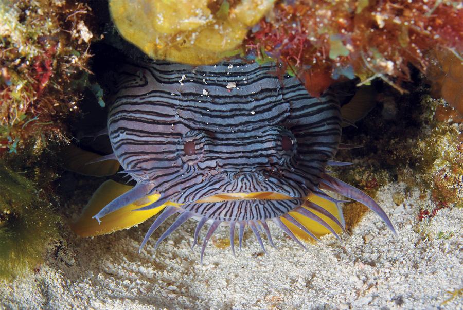 mejores lugares de buceo en el caribe - cozumel
